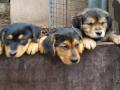 fotogalerie-hunde-welpen