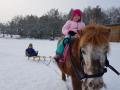 pony-zieht-schlitten02