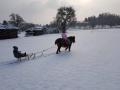 pony-zieht-schlitten03