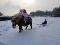 pony-zieht-schlitten04