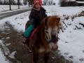 ponyreiten-im-schnee