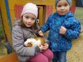 zwei-kinder-mit-meerschweinchen
