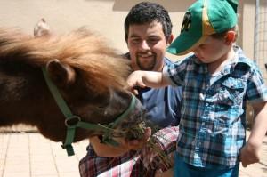 tiere-junge-fuettert-pony
