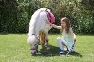 Ponys streicheln